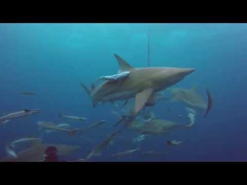 Plongee Afrique du Sud Juin 2016