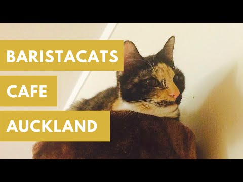 Auckland Cate Cafe | BaristaCats Cafe