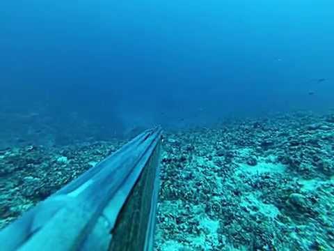 Sonar Testing Pings Diver