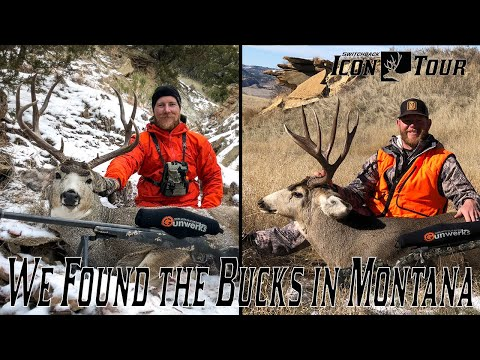 Icon Tour Day 10 - Montana Mule Deer Hunt - We Found The Bucks In Montana