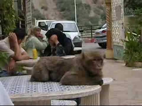 la Chiffa - Ruisseau des singes - YouTube