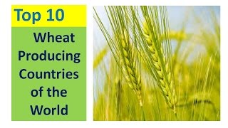 TOP 10 WHEAT PRODUCING COUNTRIES OF THE WORLD