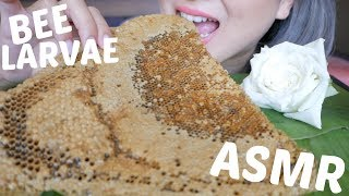 GIANT BEE LARVAE | ASMR Popping Sticky  Eating Sounds | N.E Let's Eat