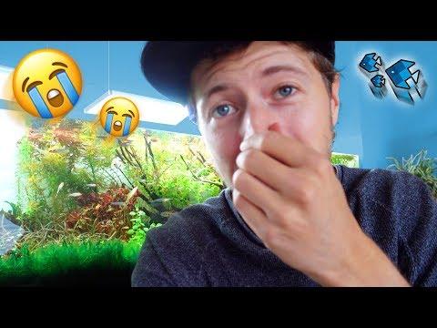 Die neuen Fische fressen meine Garnelen! 😭