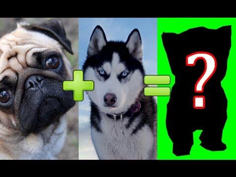 15 UNBELIEVABLE CUTE CROSS BREED DOGS PT. 1