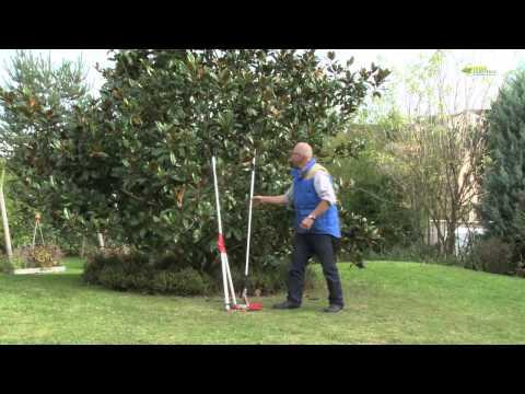 Taille d 39 une boule de buis doovi - Comment tailler un magnolia ...