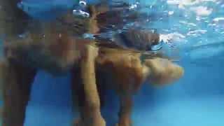 Butler The Swimming Dog Golden Retriever ~ Dan & Valerie Haines Nc