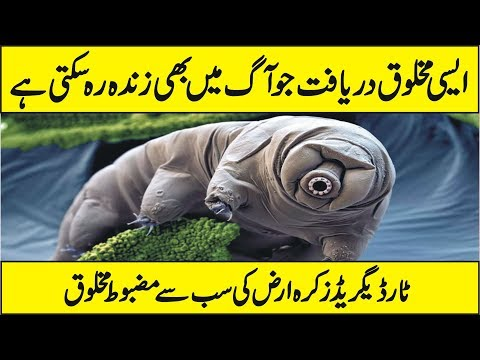 Interesting Facts of Tardigrade In Urdu Hindi