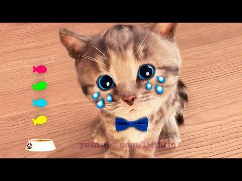 Little Kitten Adventure -My Favorite Cat Play with cute little kitten Educational game for kids #267 |