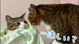 猫のお気に入り場所を夏仕様にしてみました!!  vol.278