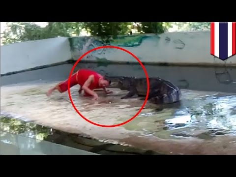 Crocodile attack: Thai zookeeper puts head in croc's mouth, croc takes a bite - TomoNews