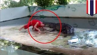 Crocodile attack: Thai zookeeper puts head in croc's mouth, croc takes a bite - TomoNews
