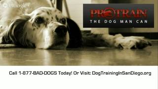 Private Dog Training San Diego Private Dog Trainer