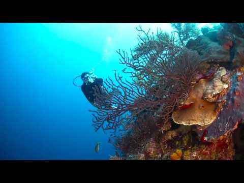 Dive the Cayman Islands with Caradonna Adventures