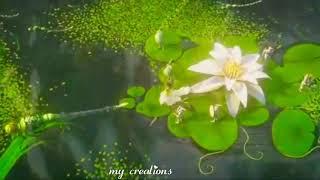 Alaiye sitralaiye Tamil song whatsapp status