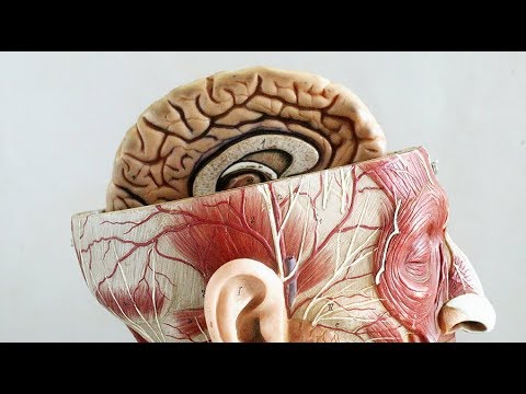 Schizophrenia gene linked to early brain development