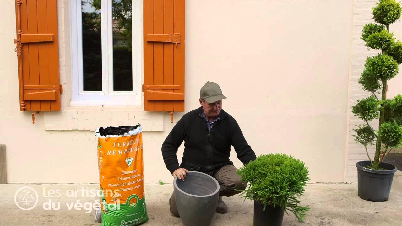 quels conif res nains planter dans une rocaille comment planter un conif re en bac en pot. Black Bedroom Furniture Sets. Home Design Ideas