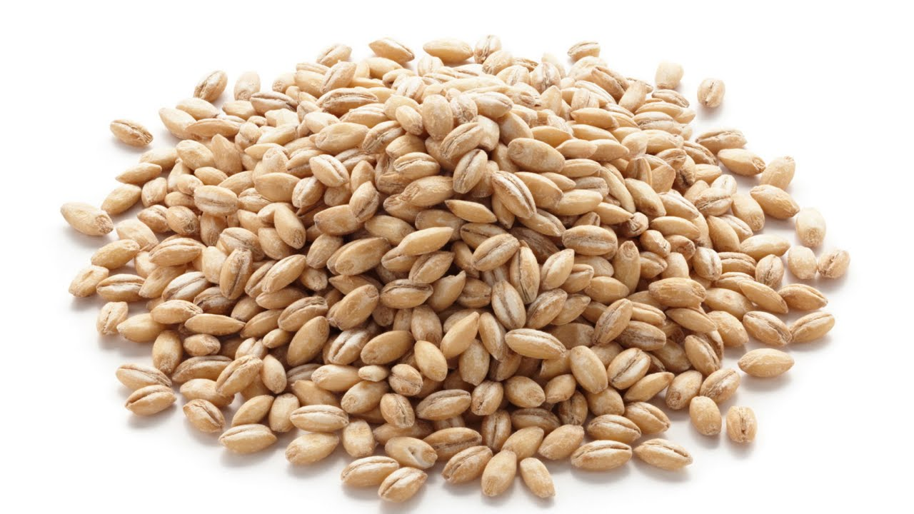 What are the health benefits of barley What are the health benefits of barley new images