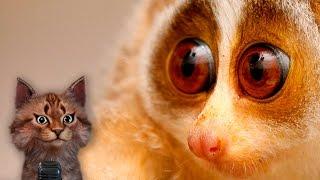 Милые животные Лори | Интересные факты | Семен Ученый