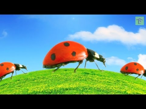 Top 5 Good and Bad Garden Bugs: How to Release Ladybugs