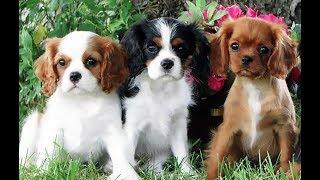 Top 10 Dog Breeds Perfect for the Country