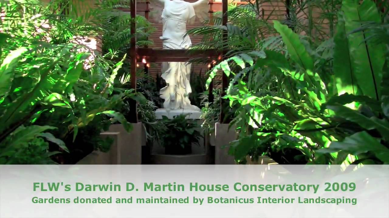 Prune This: How To Care For Ferns At The Frank Lloyd Wright Conservatory