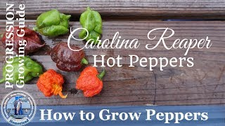 How to Grow Peppers - (PROGRESSION) Growing Guide - How to Grow Carolina Reaper Hot Peppers