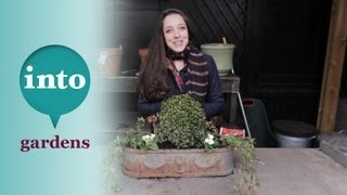 Winter Window Boxes: Planting Pt.1 With Laetitia Maklouf