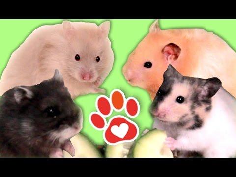 Hamster Alltag und Routine (Miyukis♥Vlog)