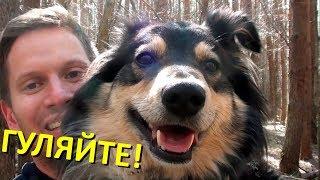 Собаки любят ДОЛГО гулять!