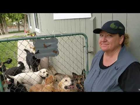A Visit With Felicia @ The Sierra Canine Academy In Gardnerville Nevada