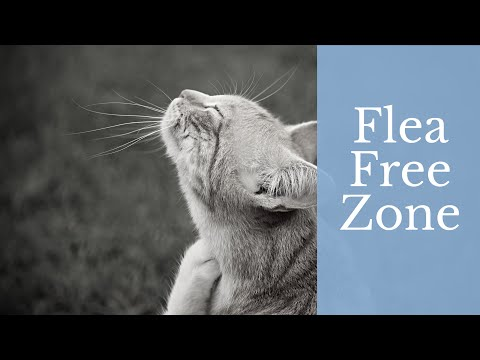 flea-treatment-for-cats-+-advantage-flea-treatment-review