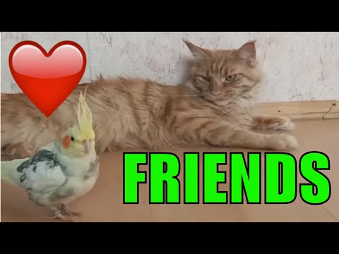 Cat and parrot friends funny animals