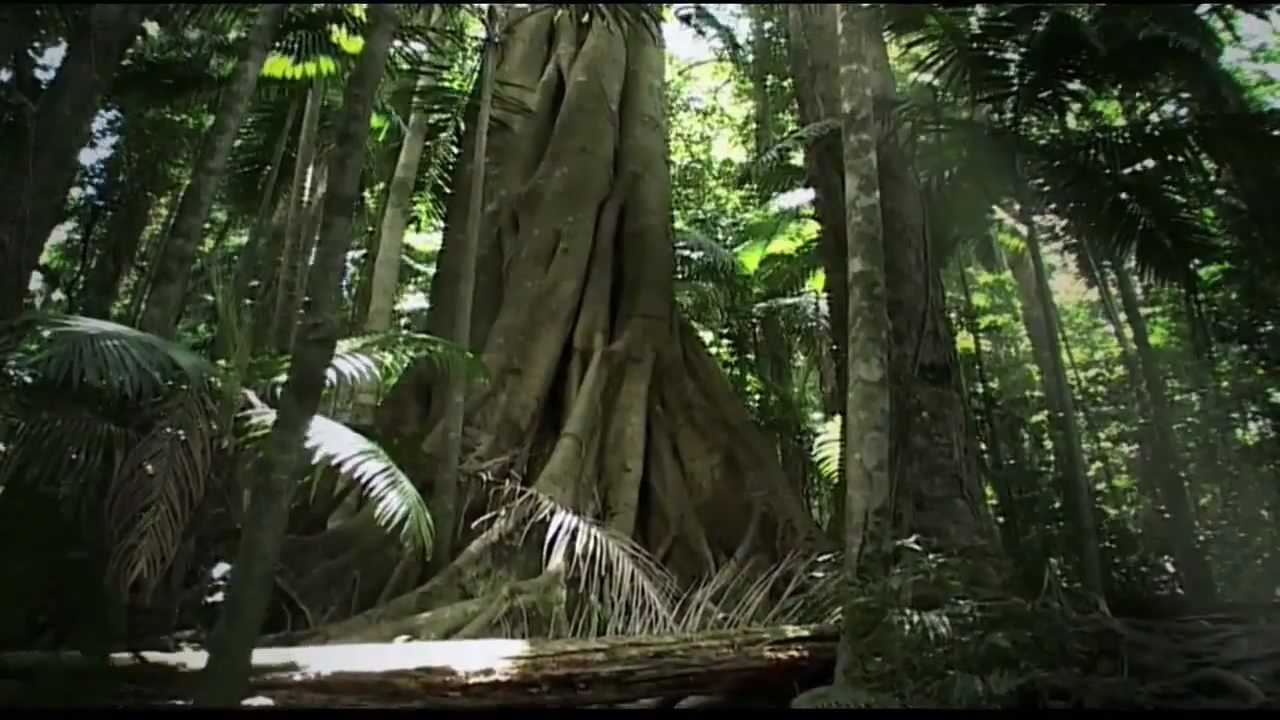 rainforest beneath the canopy youtube youtube