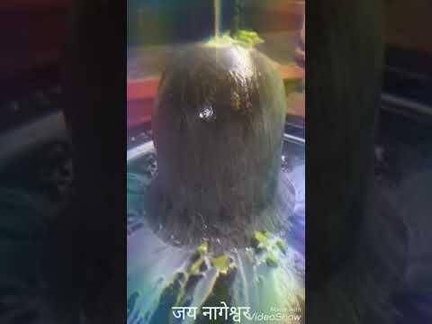 jai-shambhu-jai-shambhu-shiv-gouri-shankar-bhajan