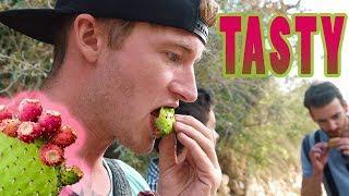 EATING CACTUS FRUIT IN THE DESERT OF JORDAN