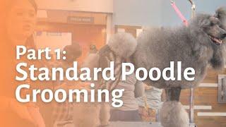 Standard Poodle Grooming Part 1