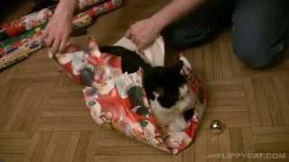 Упаковка праздничного кота