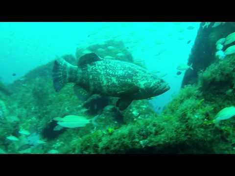 Spearfishing Jupiter Florida Scuba 9-12-15