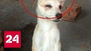 Расправа над животными: по всему Хабаровску ищут студенток-убийц