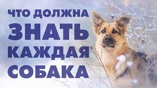 Что должна знать собака