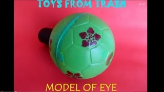 MODEL OF EYE - HINDI - Wonderful model to understand the working of the eye.