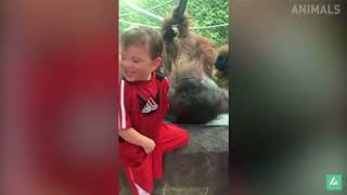 Funny videos about animals