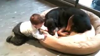 Funny Rottweiler Dog And Baby Cute