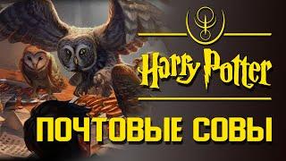 Совиная почта. Особенности чародейских птиц | Misterium - Harry Potter