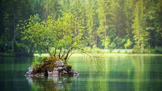 Nordic Lakeside Ambience No Loop Birds And Water Noises Soothing Waves
