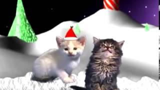 gatos cantando en navidad