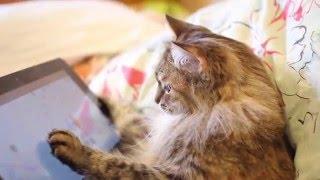 Кошка играет в планшет 🐱/👾 Cat playing tablet game Kaleido