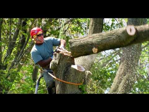 Treemendous Tree Care