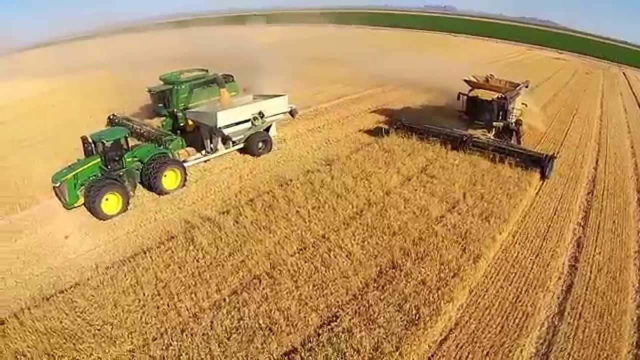 How to Harvest Barley forecast